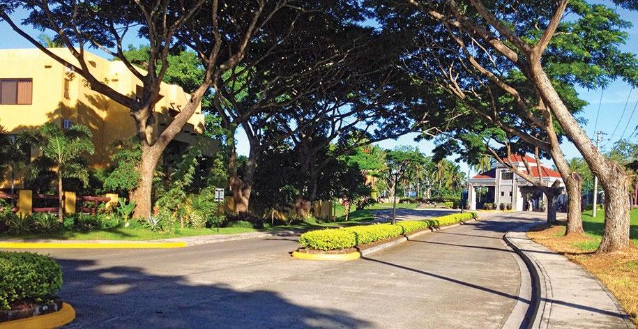 Mature shade trees line the main avenue of Mount Malarayat